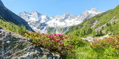 Leinwand Poster Panorama einer Berglandschaft mit Alpenrosen und Gletscher im Hintergrund