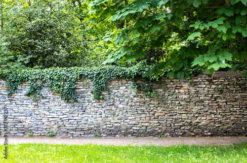 Fotografia Stone wall covered with greenery