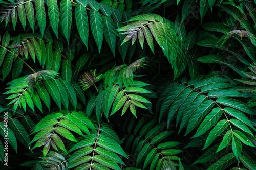 Keuken foto achterwand Palm boom natural leaf pattern
