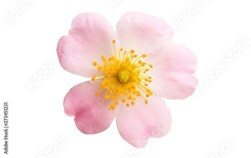 Obraz rose hips - fototapety do salonu