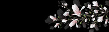 Realistic Flower, Branch Isolated On Black Background. Magnolia  Is A Symbol Of  Summer,  Femininity In The Style Of Realism. 3d Flower  Or Invitation, Design, Presentation.Widescreen. Illustration