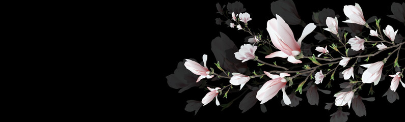 Panel Szklany Kwiaty realistic flower, branch isolated on black background. Magnolia is a symbol of summer, femininity in the style of realism. 3d flower or invitation, design, presentation.Widescreen. illustration