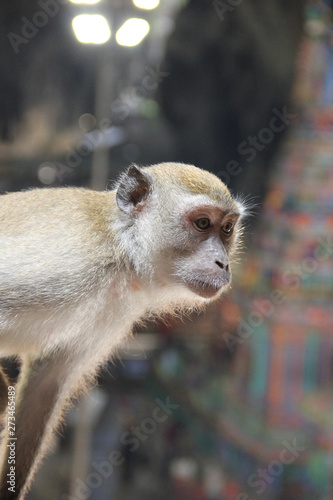In de dag Aap Monkey is a common name that may refer to groups or species of mammals