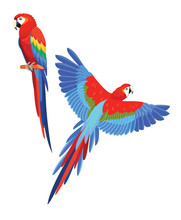 Collection Of Parrots. Vector Illustration.