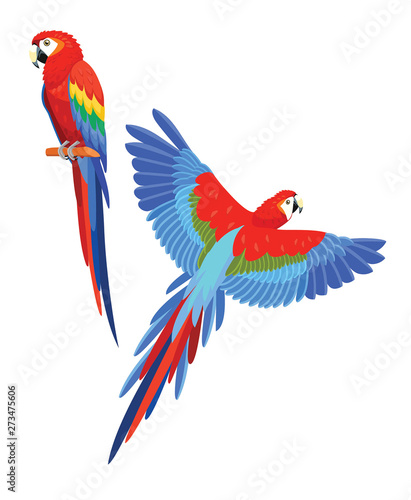 Fototapeta Collection of parrots. Vector illustration.