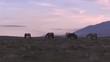 Herd of Wild Horses in the Utah Desert in Spring