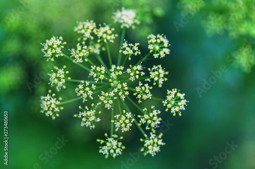 Foto auf Leinwand Texturen Flowers