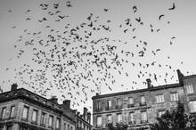 Ballet Aérien - Place Fernand Lafargue - Bordeaux