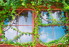 Glass Building House Covered By Green Ivy With Blue Sky