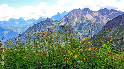 Fotografie, Obraz  Blumenwiese vor den Bergen bei Oberstdorf