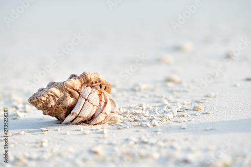 Fotografie, Obraz Hermit crab on a beach at Maldives