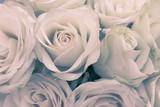 Nahaufnahme von weißen Rosen alsHintergrund