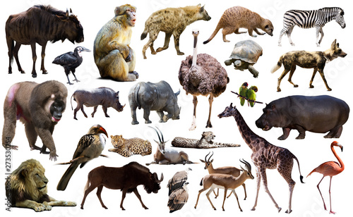 Birds, mammal and other animals of Africa isolated - fototapety na wymiar