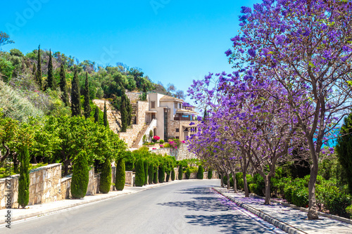 Cyprus Republic. Pissouri village. The road leads to the sea along flowering trees. Mediterranean seacoast. Pissouri resort. Tourism. Travelling by car to Cyprus. Cyprus landmarks.