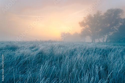 Fotografie, Obraz Beautiful autumn sunrise over cold foggy meadow