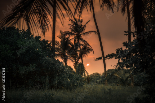Poster Palmier Tropical sunset sun palm trees silhouette landscape background travel vacation lifestyle