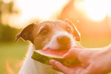 Summer, Fun, Pet Concept - Dog...