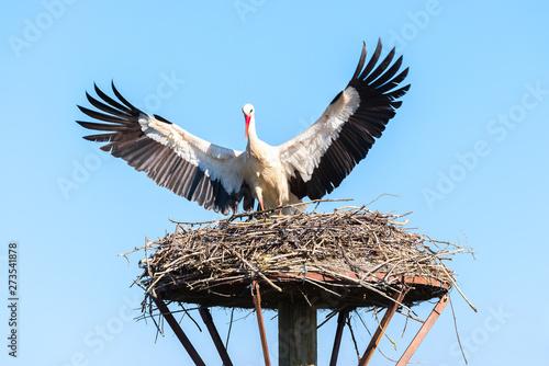 Obraz na plátně White stork lands on the nest, Salburua park, Alava, Spain