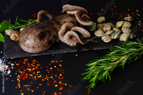 Raw octopus with clam shells, rosemary, pepper and salt is ready for cooking Tapéta, Fotótapéta
