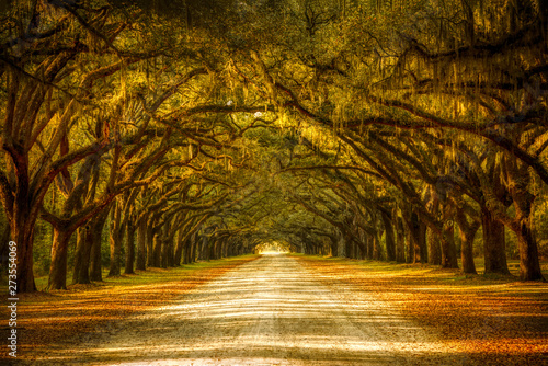 View of old oak trees with spanish moss forming an alley in Savannah, Georgia Canvas Print