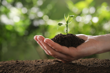 Woman holding young green seedling in soil against blurred background, closeup with space for text