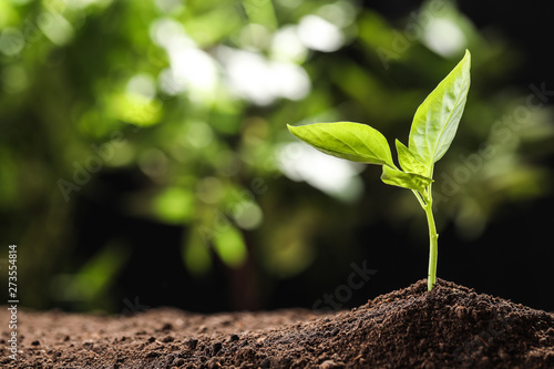 Fototapeta Young seedling in soil on blurred background, space for text obraz na płótnie