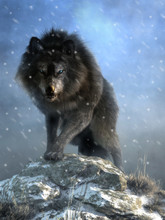 A Large Shaggy Dire Wolf Bares Its Wicked Teeth As It Glares At You With Deep Blue Eyes. The Ice Age Predator Growls And Steps Over Snow Covered Rocks As It Advances. 3D Rendering