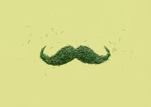 Green Mustache From Fir Tree Needles On Green