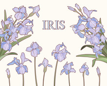 Watercolor Style Purple Iris