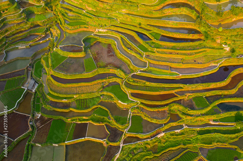 Cadres-photo bureau Miel Terraced field in guizhou china