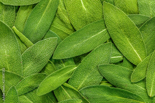 Poster Montagne close up a herb sage leaf abstract texture background