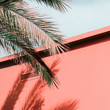 canvas print picture Plants on pink fashion concept. Palm. Tropical style