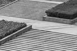 Architecture stairway in park