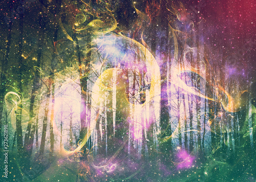 Fototapety, obrazy: Winter forest space design