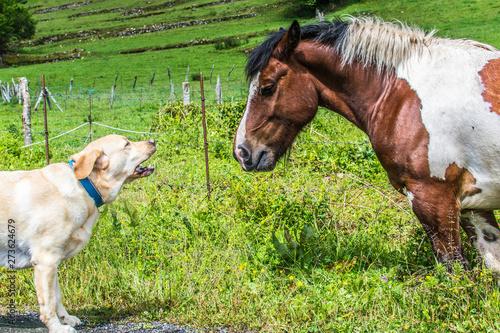 Papel de parede  Perro ladra a un caballo