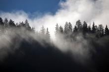 Fog Among Tree Tops, Bad Oberdorf, Bad Hindelang, Allgau, Bavaria, Germany, Europe