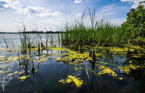 Fototapeta  Marshland nature of Louisiana. US Natural Parks