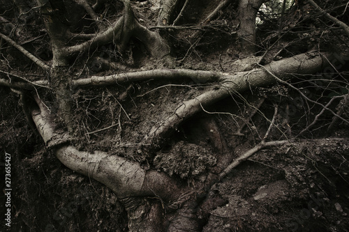 dark scary roots texture background Canvas-taulu