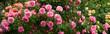 Blumen 1098