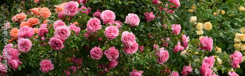 Aluminium Prints Garden Blumen 1098