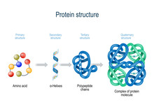 Levels Of Protein Structure Fr...