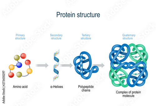 Photo Levels of protein structure from amino acids to Complex of protein molecule
