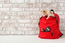 School Backpack With Cute Kitt...