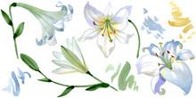 White Lily Floral Botanical Fl...