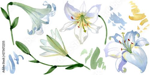 Fotografia  White lily floral botanical flowers