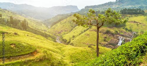 Foto auf Leinwand Melone green tea mountain waterfall forest landscape.