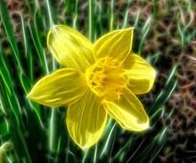 Fractal Flower Narcissus
