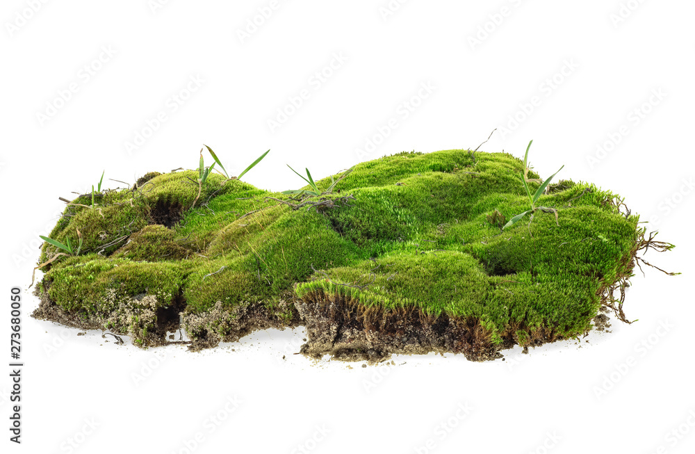 Fototapety, obrazy: Green moss with grass isolated on a white background
