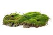 Leinwandbild Motiv Green moss with grass isolated on a white background