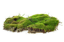 Green Moss With Grass Isolated...